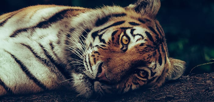 Visit London Zoo